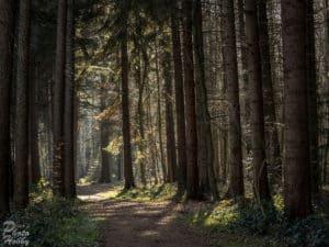 Wald bei Himmelpforten