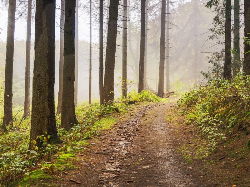 Wald bei Bielefeld